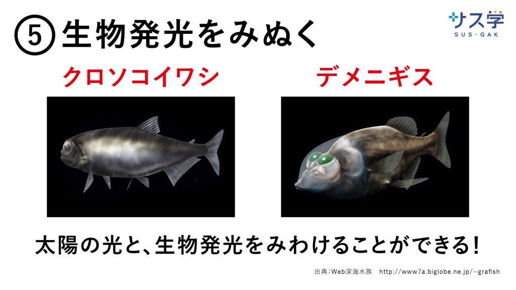 深海スライド-2